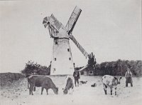 Old pictire of Tollerton Windmill.